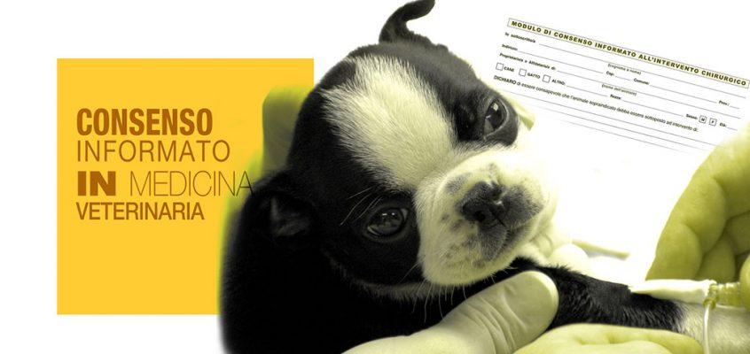 Consenso Informato Nella Chirurgia Del Cane E Del Gatto