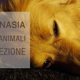 Eutanasia-Negli-Animali-da-Compagnia-Corso ECM FAD Missione Veterinario di Medical Evidence