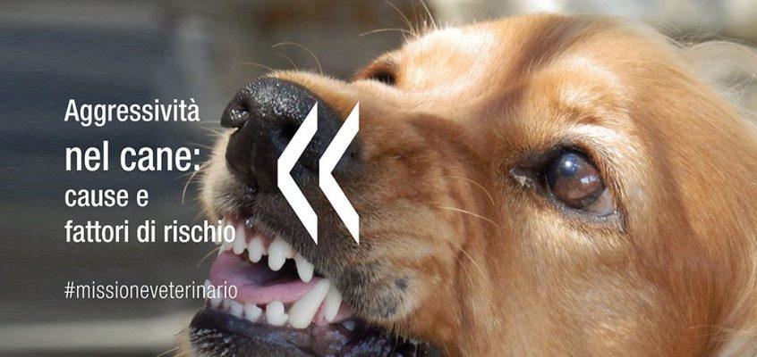 Aggressività nel cane: cause e fattori di rischio