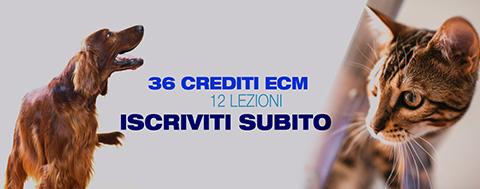 Corso-ECM-FAD-Missione-Veterinario-Medical-Evidence-36 CREDITI - 12 LEZIONI
