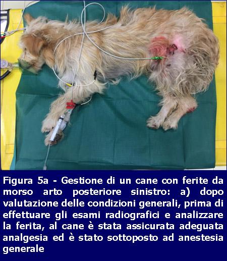 Gestione ferite-cane-Missione Veterinario
