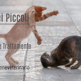 Ferite-Piccoli-Animali-Valutazione-Trattamento-MissioneVeterinario-ECM-FAD