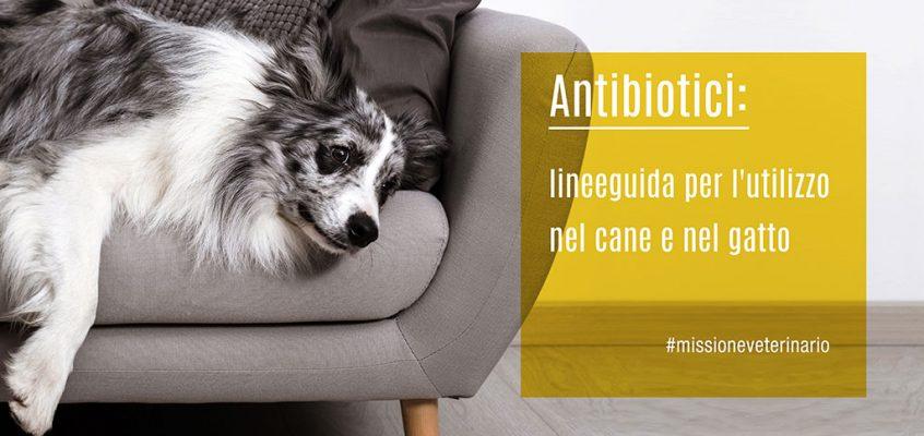 Antibiotici: lineeguida per l'utilizzo nel cane e nel gatto