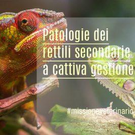 Patologie-dei-rettili-secondarie-a-cattiva-gestione