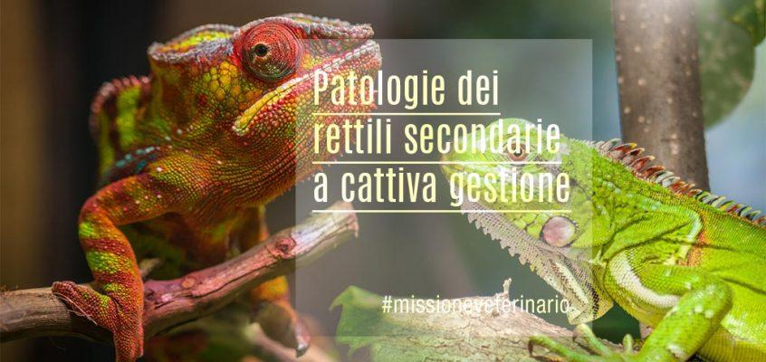 Patologie dei rettili secondarie a cattiva gestione