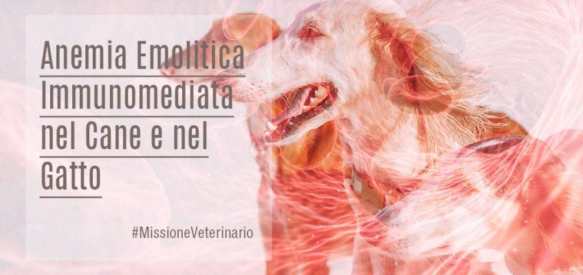 Anemia-Emolitica-Immunomediata-nel-Cane-e-nel-Gatto