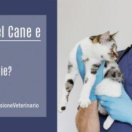 Vaccini-Cane-Gatto-MissioneVeterinario-ECM-FAD