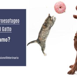 Reflusso-gastroesofageo nel cane e nel gatto