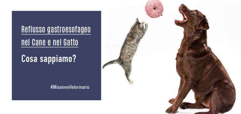 Reflusso gastroesofageo nel cane e nel gatto: cosa sappiamo?