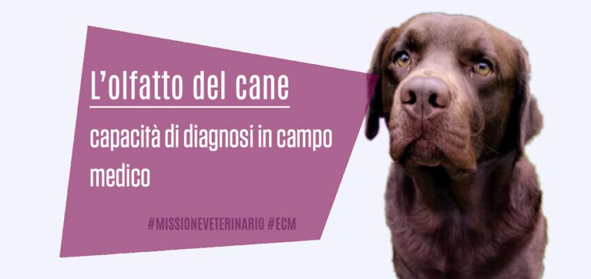 Olfatto-del-Cane-capacita-di-diagnosi-in-campo-medico-Missioneveterinario-ECM