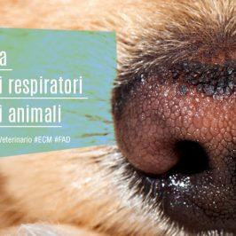 Semeiotica-dei-rumori-respiratori-cane-gatto-ECM